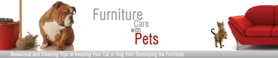 Furniture with Pets Header